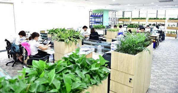 15 loại cây cảnh văn phòng đẹp và cực dễ trồng